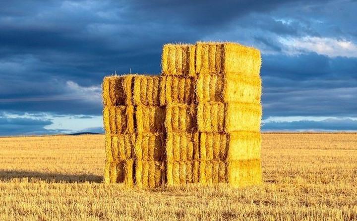 玉米秸秆综合利用