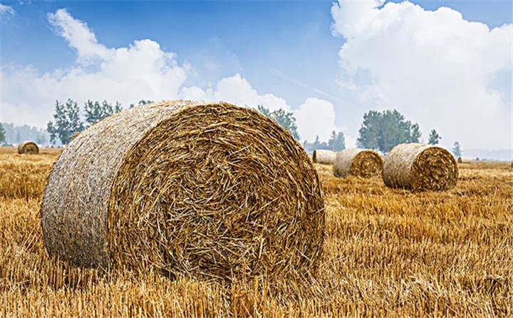 每一台稳定可靠的玉米秸秆颗粒机背后,是一个优秀负责任的颗粒机厂家!