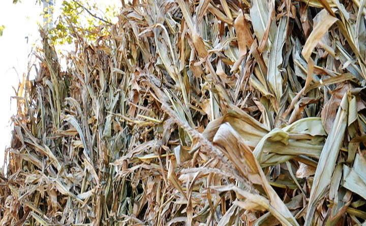 玉米秸秆颗粒原料
