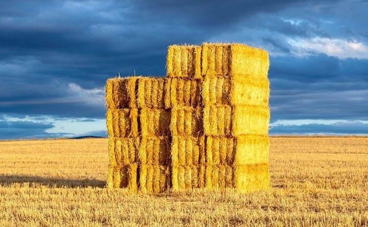 玉米秸秆颗粒燃料