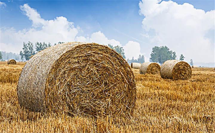 黑龙江省海伦市用于秸秆综合利用共投入1.6亿元,加快玉米秸秆颗粒机的使用