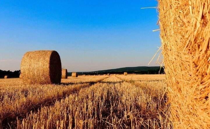 稻壳的新出路---秸秆颗粒机之燃料颗粒