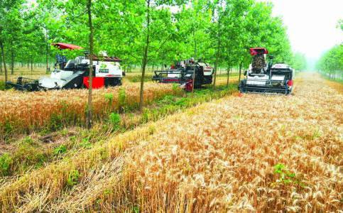 收割过后的小麦秸秆