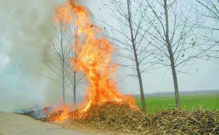 秸秆焚烧产生滚滚浓烟