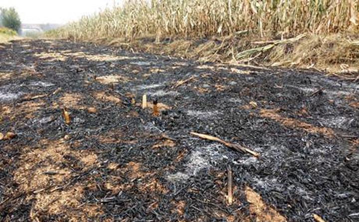 秸秆焚烧过后的土地