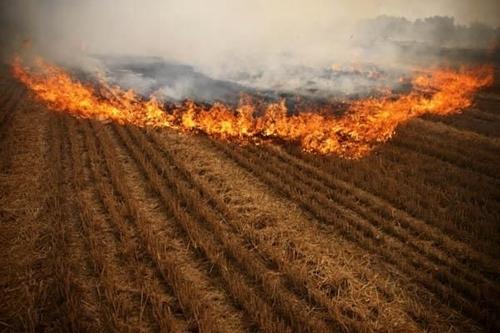 秸秆焚烧造成环境污染