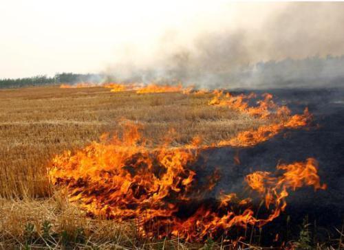秸秆焚烧造成严重环境污染