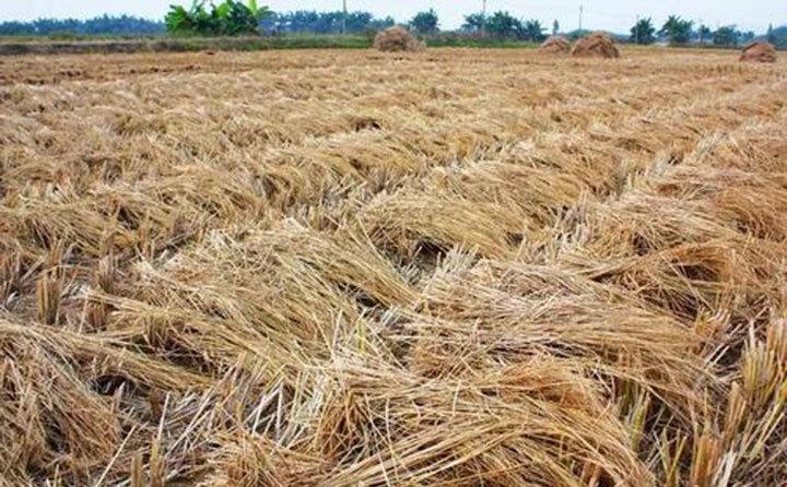 安徽农作物秸秆