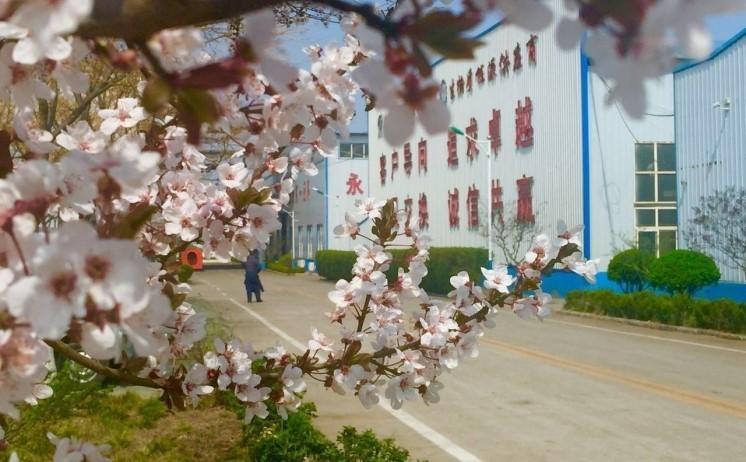 山东金格瑞的厂区一角美景
